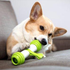 펫긱 플레이본 움직이는 강아지 운동간식자동장난감