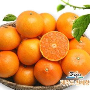 [올찬농산] 천혜향(왕특대/특대) 3kg(8-13과) /제주직송